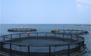 Becken, Schwimmkäfige und Fischteiche