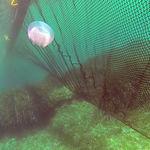 Anti-Quallen--Sperre / schwimmend / für Stillwasser