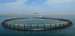Fischkäfig für Aquakultur