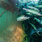 Netz für Aquakultur / Für Fischkäfig